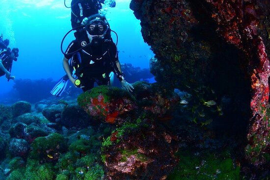 Diving Experience in Fernando de...