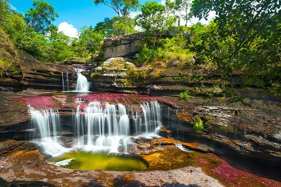4-Day Trip to Caño Cristales (the River of Many Colors) and the Jungle