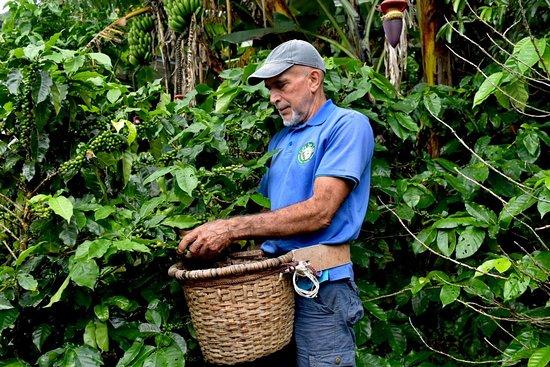 Монтеверде, Коста-Рика: Plantas de Café