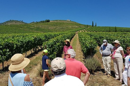 Douro Valley Historical Tour with...