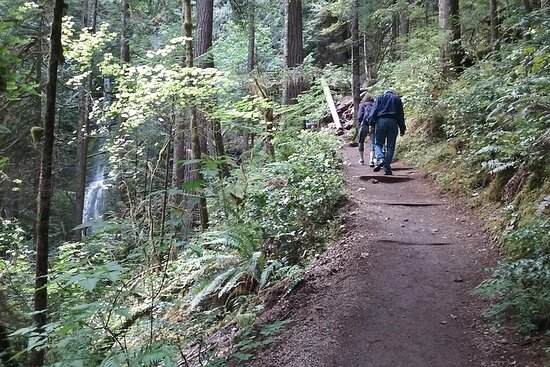Olympic National Park and Hoh Rain Forest Overnight Tour Φωτογραφία