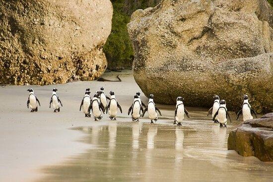 巨石灘企鵝殖民地半日遊