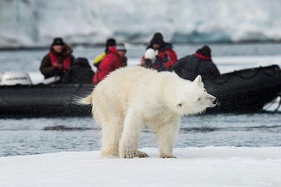 13D In Search of Polar Bear & Pack Ice + Lofoten - Departure 31 Jul...