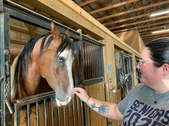 Unique Horse Farm Tours