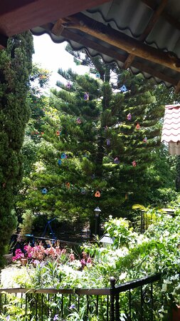 Catarina, Nicaragua: Restaurant Christmas tree...