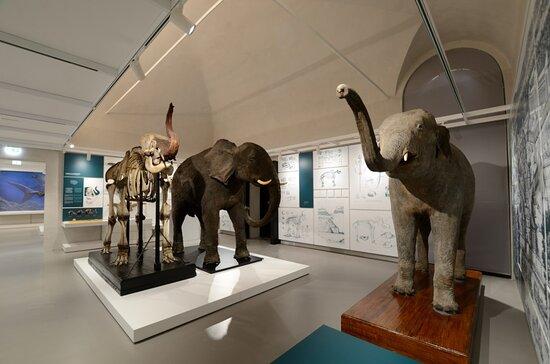 Kosmos - Natural History Museum