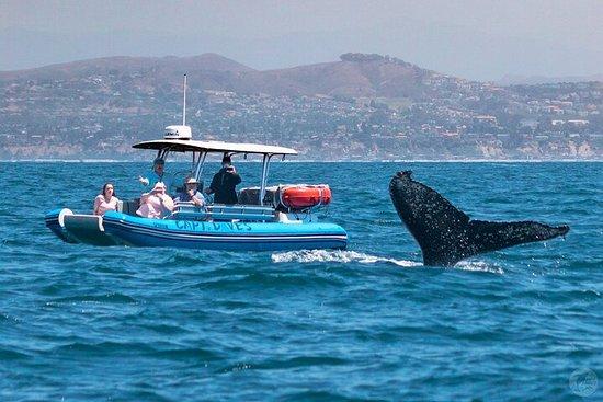 High Speed Zodiac Whale Watching Safari from Dana Point