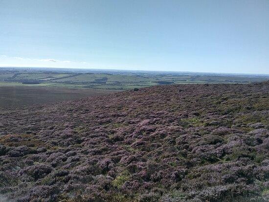 Simonside Hills