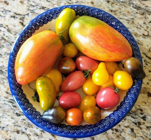 Rainbow Tomatoes Garden