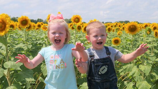 Richmond, MO: Very Excited to do a youtube video about the sunflower patch