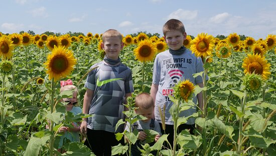 Richmond, MO: Make sure to checkout this sunflower patch in person or watch our video to see what you are missing