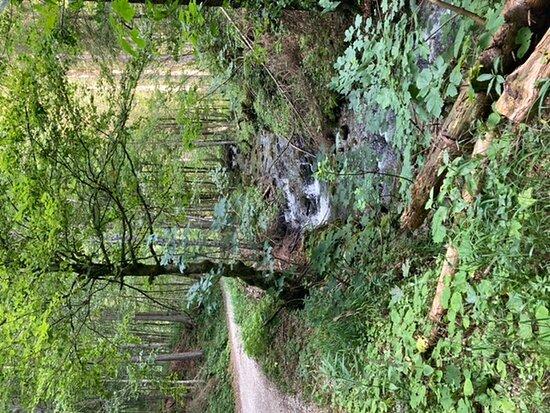Naturschutzgebiet Weitsee