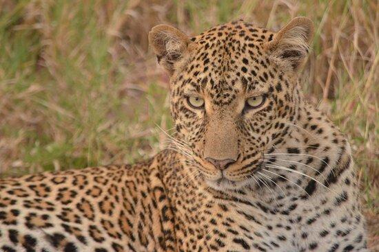 Rafiki's African Safaris