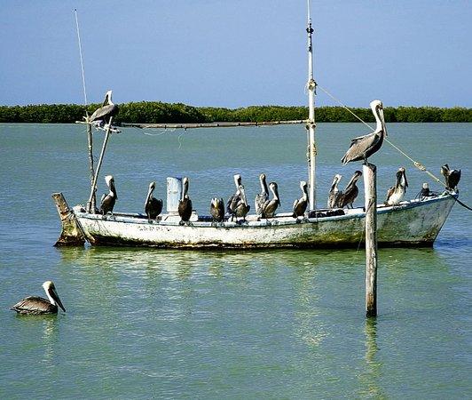 Yucatan 61