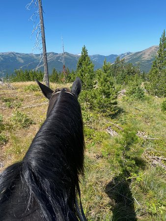My view from my horse for the day, Arrowhead.