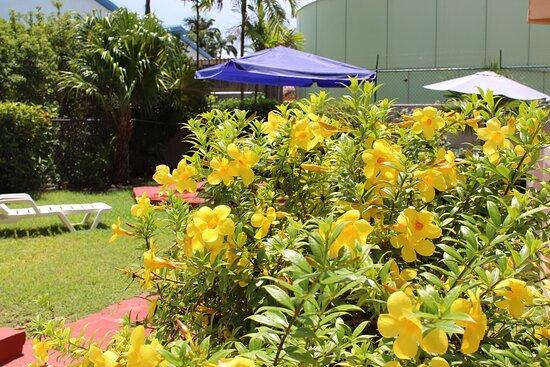 Melbourne Inn & Car Rental - Picture of Melbourne Inn & Car Rentals, Barbados - Tripadvisor