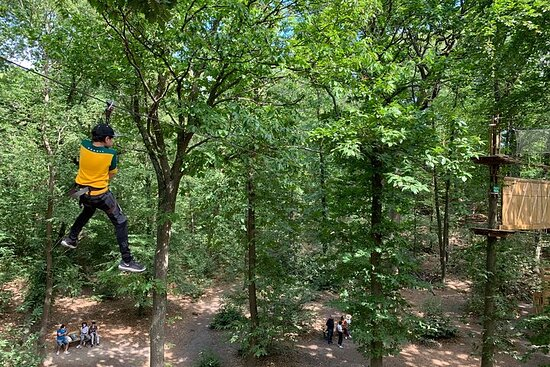 Accrobranches course in the middle of the forest in...
