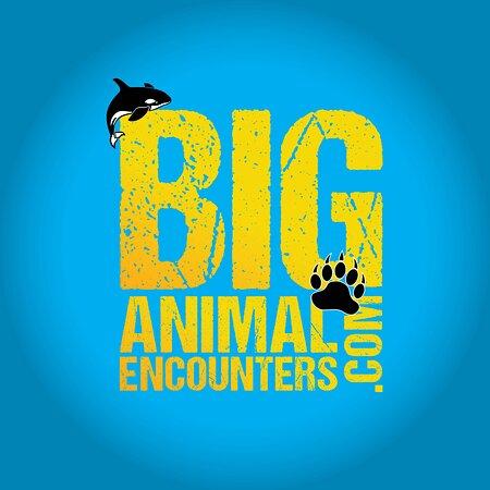 Big Animal Encounters
