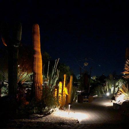 Catalina Foothills Photo