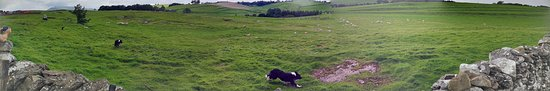 Nateby, UK: Panorama taken from the beer garden. It's the same sheepdog twice!