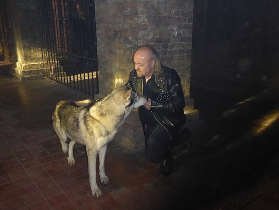 Watermill Wolves Wolf-dog Actors