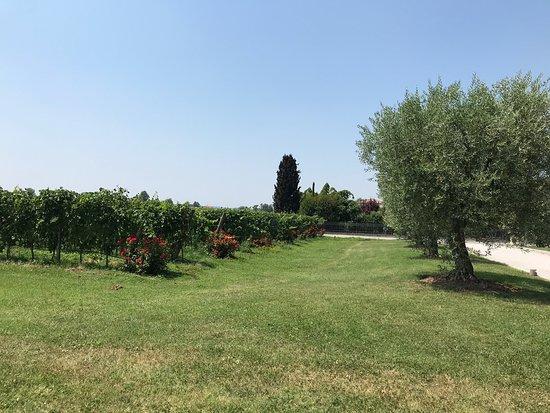Azienda Agricola Bulgarini - Cantina Bulgarini
