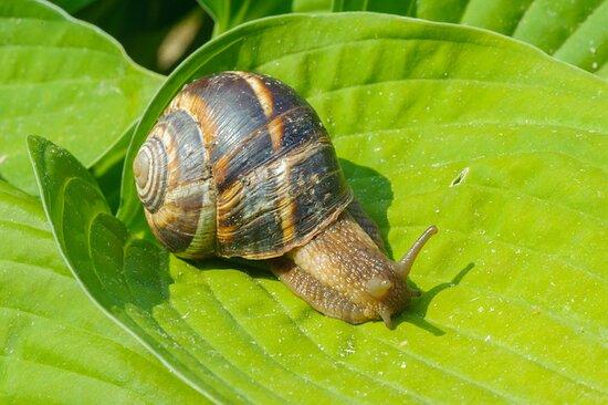 Inclusive Bio Snail Farm