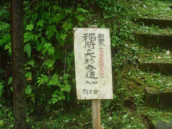 Inari Giant Pine Tree
