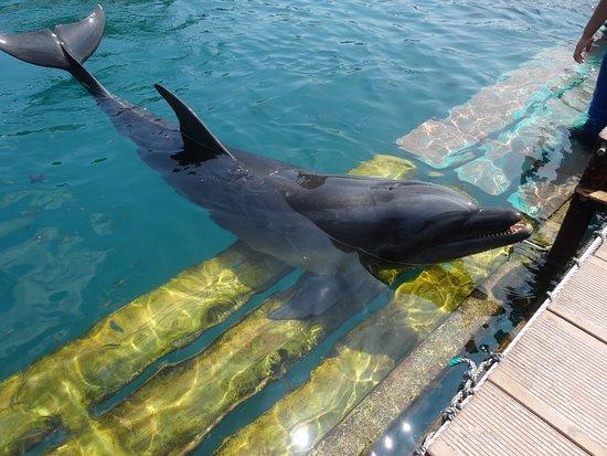 Dolphin Base