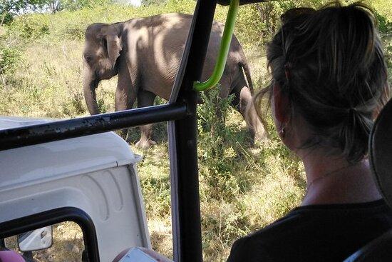 En Udawalawa safari-dagstur fra Galle...
