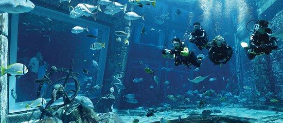 руководитель фото аквариум бурчи араб имея профиля соцсети