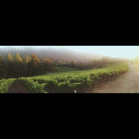 La Honda, كاليفورنيا: Fog over Mindego