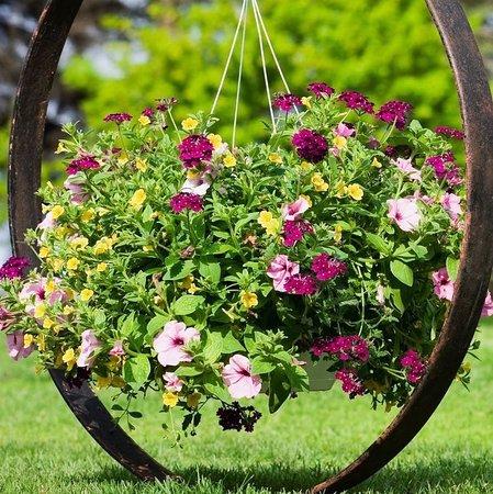 Σταυρούπολη, Ελλάδα: Κάτσε καλά περιπτερά..Δυο μαραμένα λουλούδια έφερες. Εμείς φέραμε όλο τον βοτανικό κήπο..Άντε μην τα πάρω τώρα