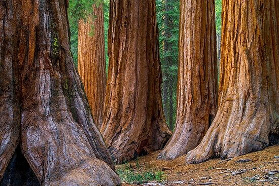Small Group Redwoods and Wine Country...