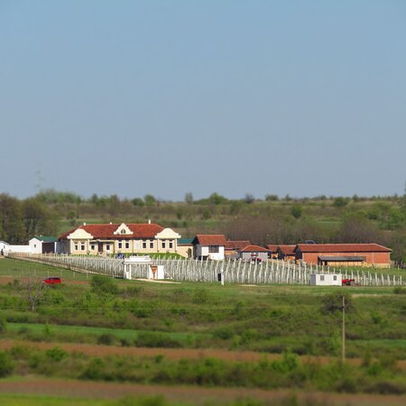 Negotin, Σερβία: POGLED NA IMANJU BOIERESCU