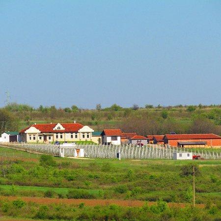 Negotin, Σερβία: Pogled na imanji Boierescu