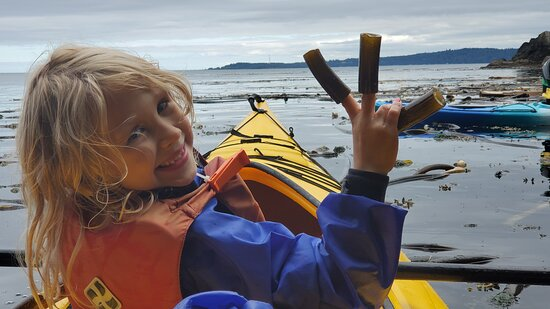 Half-Day Sea Kayaking Trip Near Olympic National Park – kép