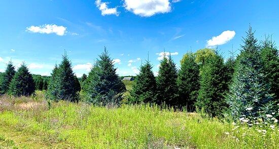 Christmas Tree Farms 2020 Dutchman Tree Farm! A Premier Christmas Tree Farm in Northern