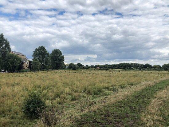 Wilhorn Meadow
