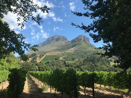 Guided Vineyard Hike Tour