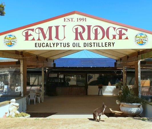 Emu Ridge Eucalyptus