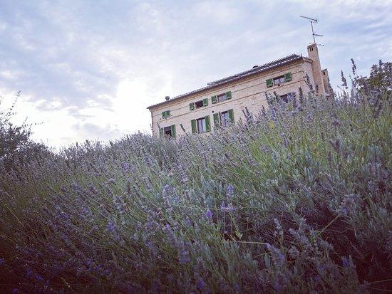 Francavilla d'Ete, İtalya: Casal Dei Fichi