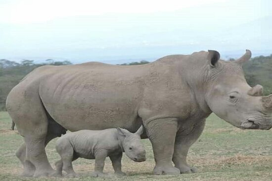 mara bush safaris