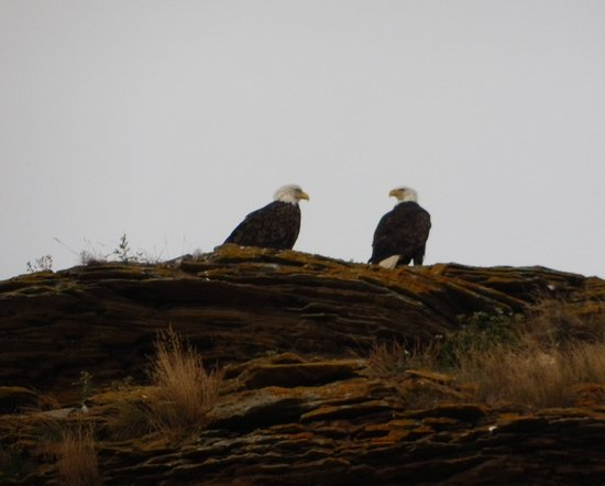Big Bras d'Or, Canadá: Eagles on Bird Islands