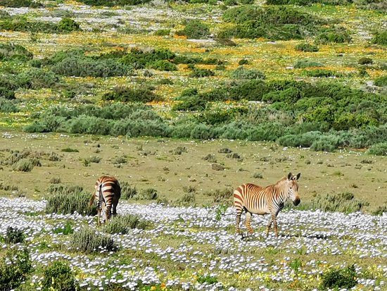 Cape Town, South Africa: West Coast National Park.