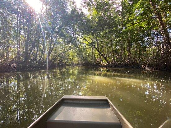 Playa Zancudo, Costa Rica: The mangroves