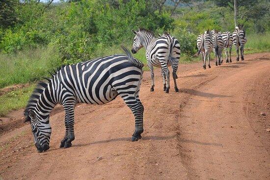marv safaris uganda