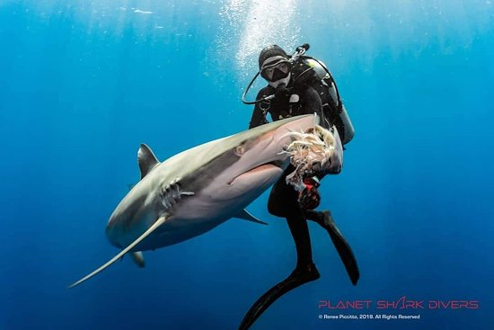 Salty Divers Jupiter 2020 All You Need To Know Before You Go With Photos Tripadvisor