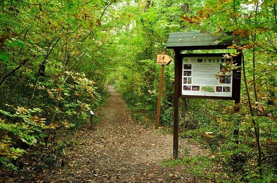 Uno dei sentieri della Selva di Castelfidardo (foto Daniele Carlini)