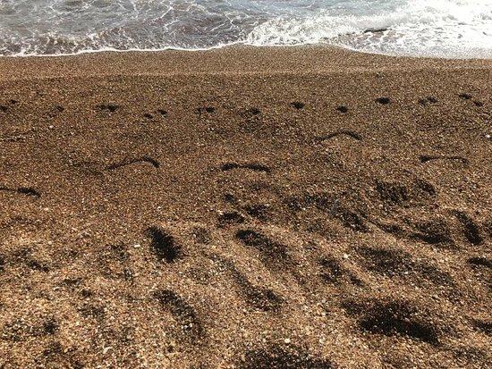 Omi Beach